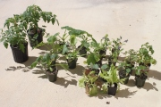 First 2013 Plants for Garden