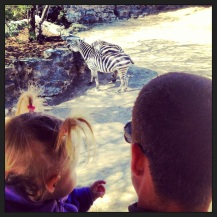 Zebras with Daddy!