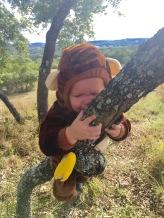 Monkey in a tree!!