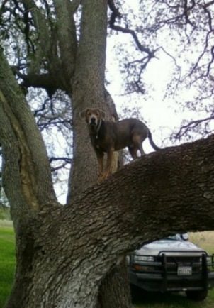 Smoke Climbed a Tree!