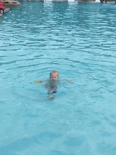 Rex swimming
